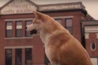 История верного пса Хатико вдохновила создателей фильма.