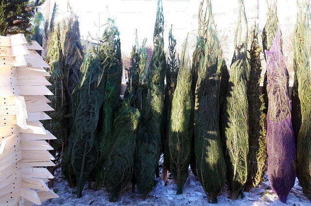 В Тюмени полиция изъяла более 100 елок без документов