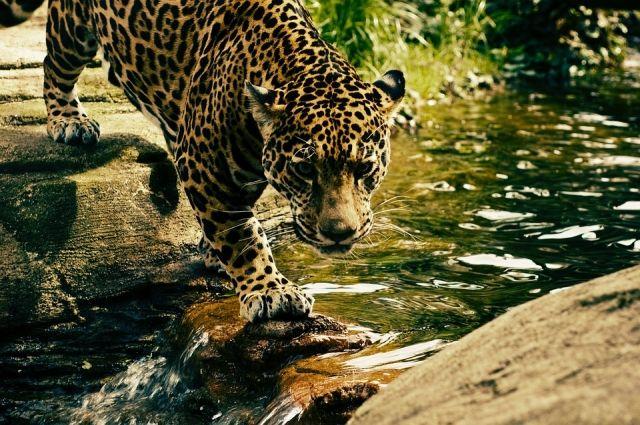 Фото и видео питомцев «Земли леопарда» победили во всероссийском конкурсе