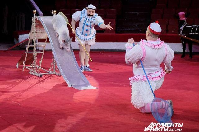 Перед зрителями выступят гимнасты и другие артисты