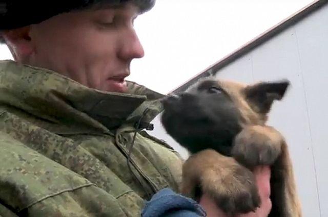 История малинуа: Росгвардия сняла новогодний фильм о служебной овчарке.