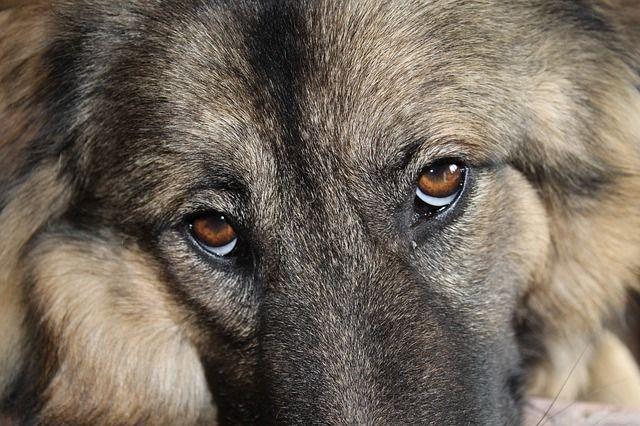 Шестерых собак вПерми отравили дог-хантеры