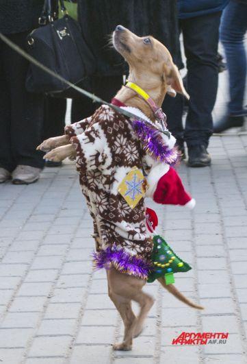 Моня, костюм «Олень Санта Клауса».