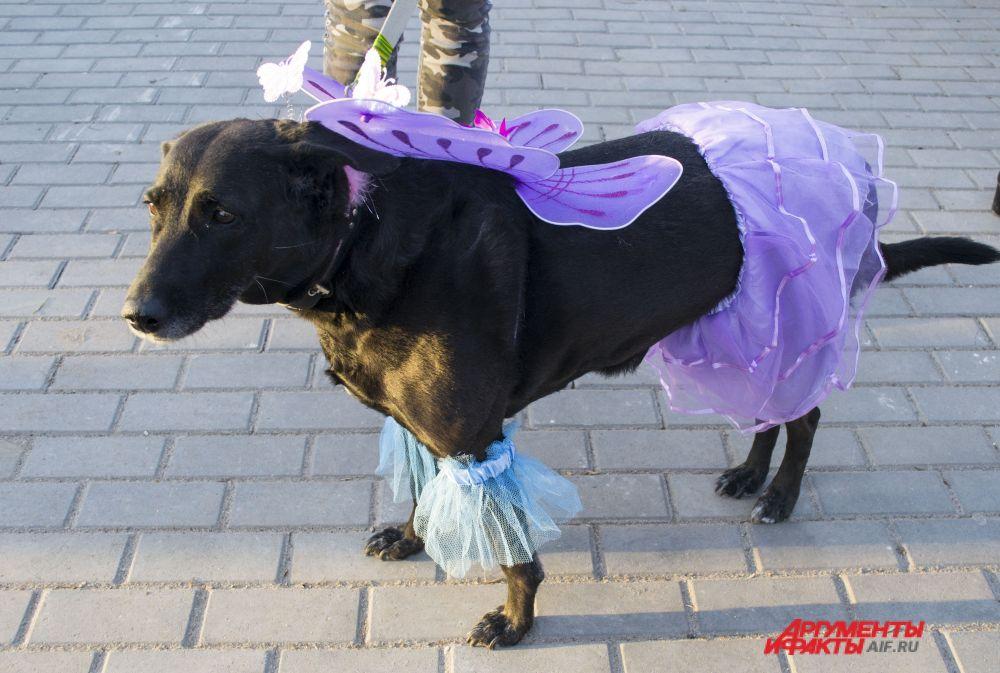 Метис Боня в костюме «Волшебная фея».