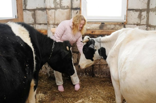 В Тюменской области растет число семей, которые держат пять и более коров