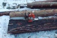 В Омской области незаконно вырубали лес.