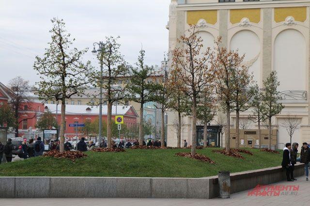 В столице высадили 60 тыс. деревьев в 2017г.