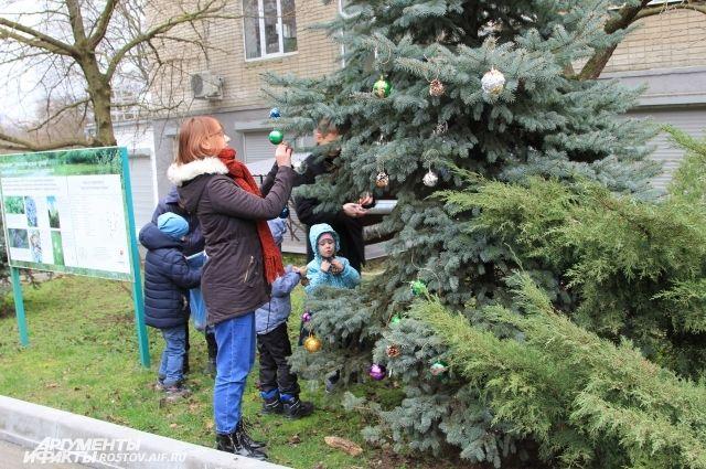 В Ботаническом саду дети нарядили своими игрушками живую ёлку.