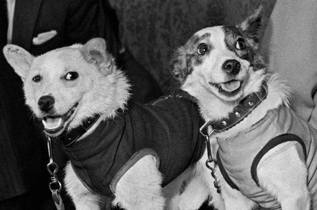 Этих собак из Советского Союза знает весь мир.