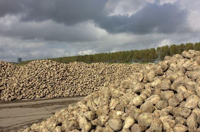 В Татарстане впервые собрали 3 млн. тонн сахарной свеклы.
