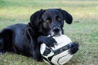 Тюменская собака, которую пожалел Ярмольник, переехала в новый дом