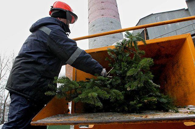 Утилизируйте Новый год. Как сдать елочку в специальный пункт утилизации?