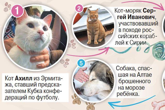 Самые популярные коты исобаки вРоссии. Инфографика