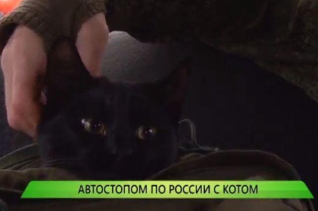 Мужчина взял кота в путешествие по стране.