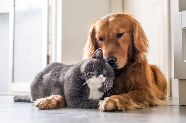 Кто умнее - кошки или собаки? - Real estate