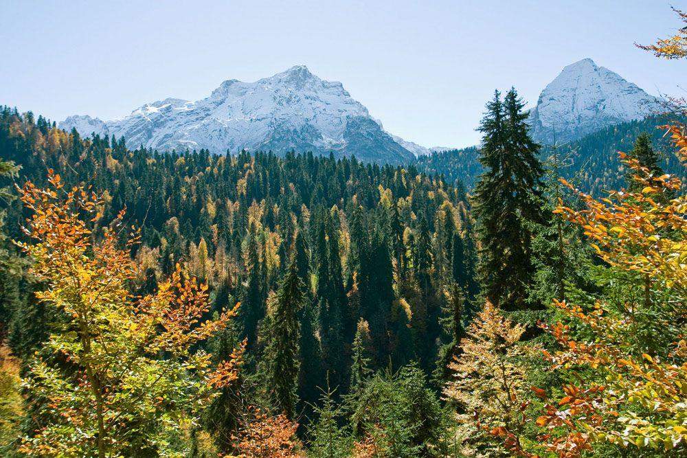В лесах заповедника можно увидеть бук восточный, каштан посевной, пихта Нордманна.