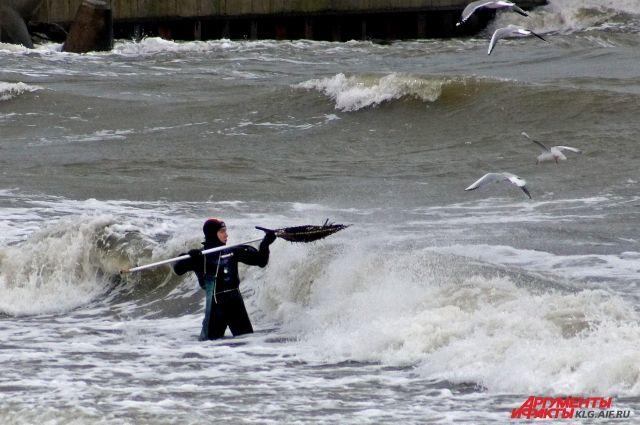 На пляже в Янтарном незаконно припарковались более 70 машин ловцов янтаря.