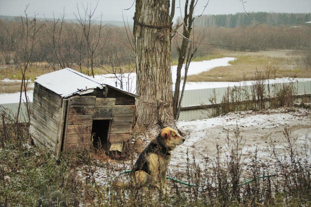 11 октября 1988 года было подписано распоряжение Пермского облисполкома об организации на территории государственного охотничьего заказника «Вишерский» филиала Государственного заповедника «Басеги».