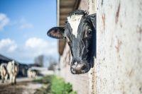 Под Тюменью в пожаре погибли восемь коров
