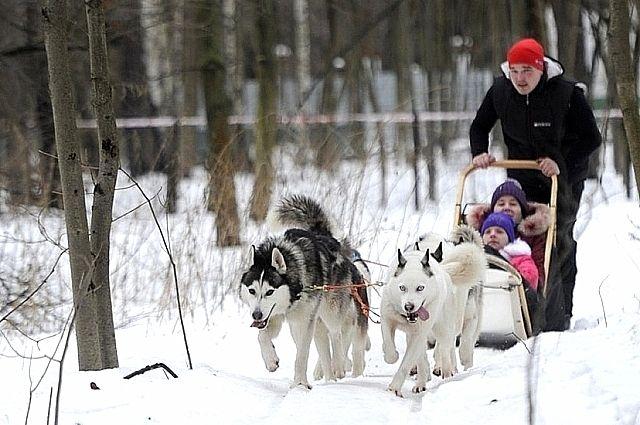 По Москве на санях. Какие зимние развлечения предлагают столичные парки