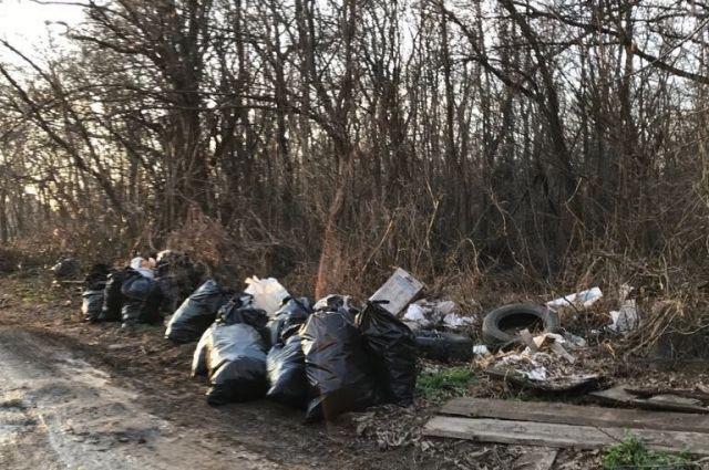 Стерритории городских лесов Ростова вывезли неменее 15 тонн мусора