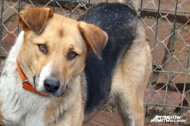 ВСоветске изокна жилого дома выбросили трёх собак