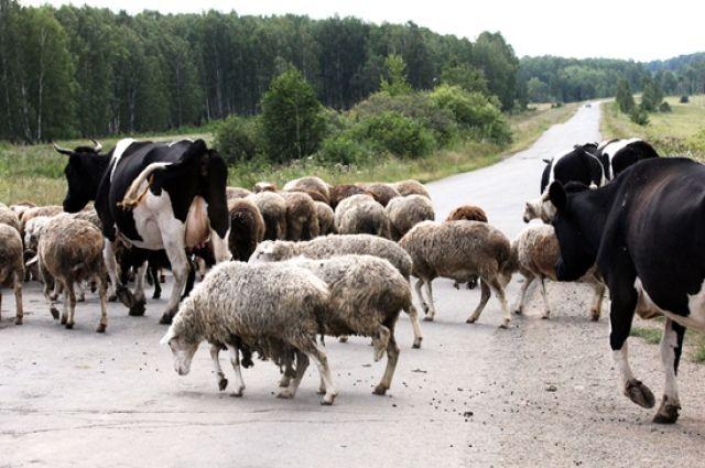 Поголовье коров сократилось почти на 200 тысяч голов.