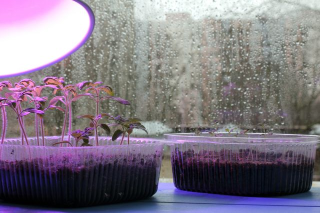 Как выбрать лампы для подсветки рассады?