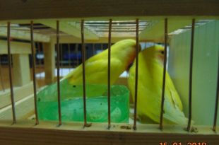 Провоз птиц без документов является нарушением.