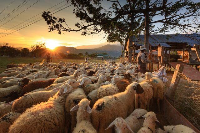 ВРумынии овцы разрушили систему защиты НАТО отбаллистических ракет