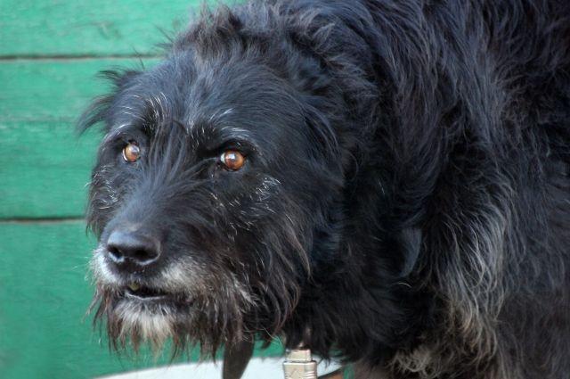 В Асекеевского района соседская собака набросилась на маленьких школьников.
