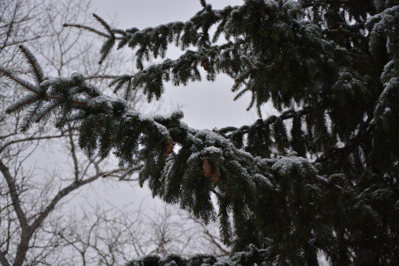 снежная елка
