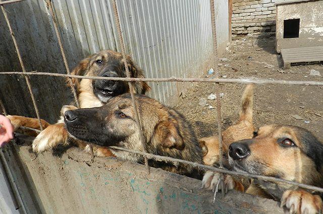 СКпроверяет данные онападении бродячих собак нашкольников вКазани