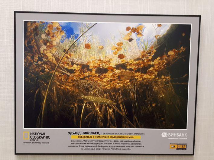 Фотография-победитель была сделана на озере Челдови в Марий Эл.