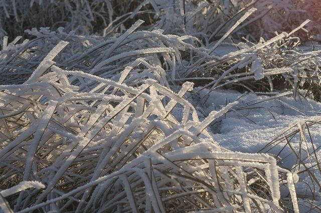 Предпоследняя рабочая неделя января принесёт приморцам арктическую свежесть