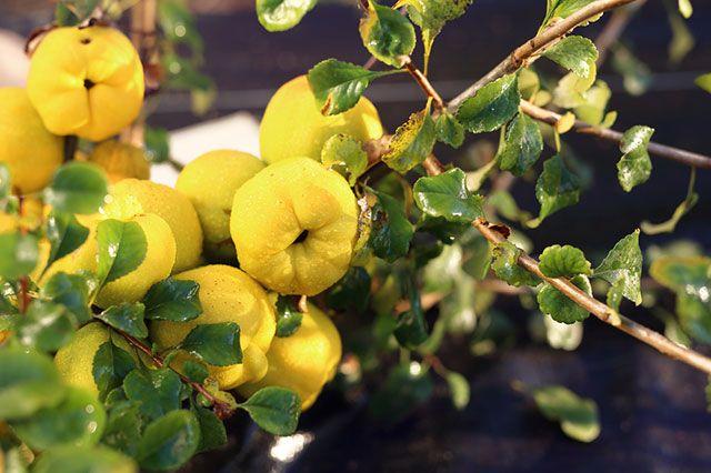 Просто, красиво и вкусно. Какие культуры украсят сад и дадут плоды?