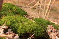 Мох - естественный консервант и кладезь полезных микроэлементов.