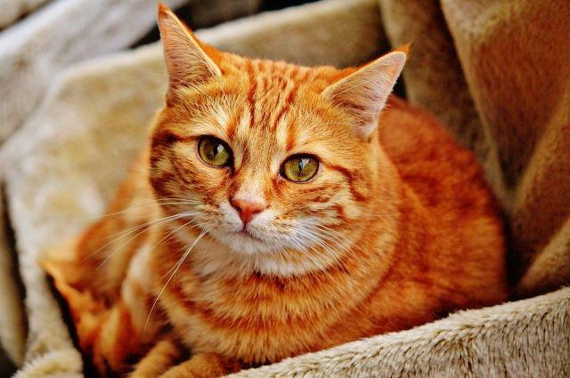 СМИ: в Италии кот получил в наследство 30 тысяч евро - Real estate