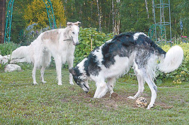 Если друг оказался вдруг… Могут ли растения и собаки ужиться на участке?