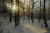 Знакомый заманил мужчину в лес.