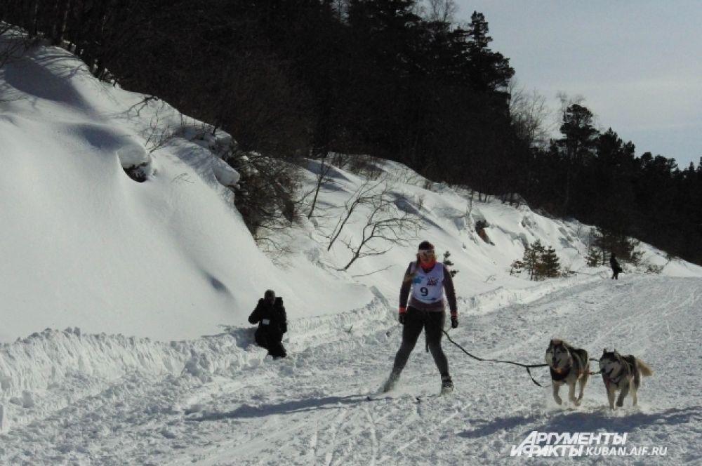 в соревнованиях участвовали не только упряжки, но и лыжники с собаками.