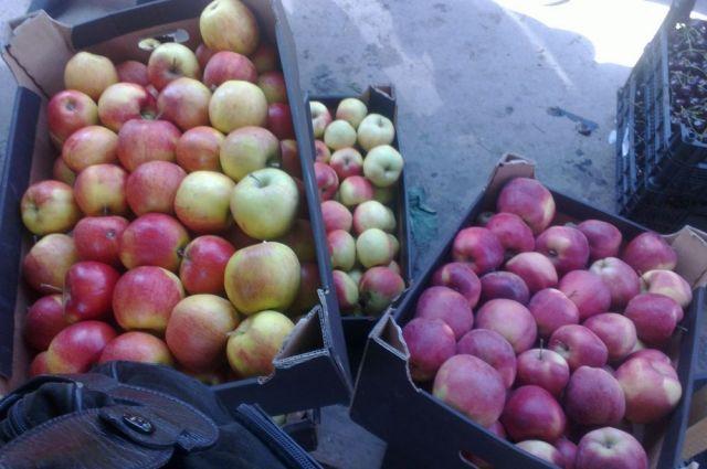 Яблоки из Польши запрещены к ввозу на территорию России.