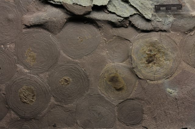 Ученые разгадывают тайну древних организмов с помощью биомаркеров