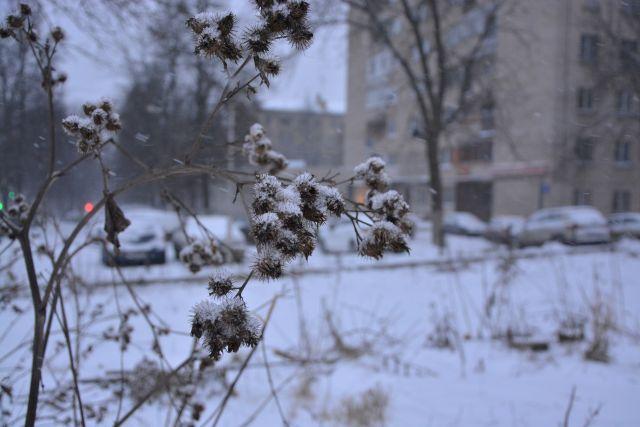 Снег в городе выпал лишь в середине января.