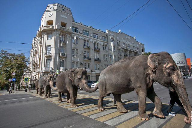 Зоопарк Ростова соберет «звериную» футбольную команду кЧМ 2018