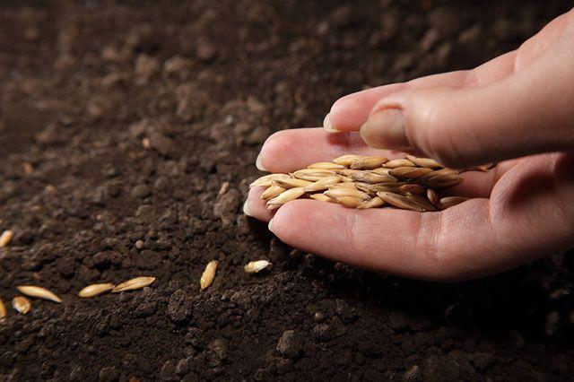 Можно ли сажать семена, срок годности которых истек?