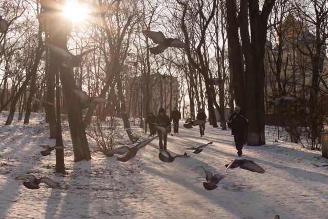 Даже в самый лютый мороз голуби угощению рады.