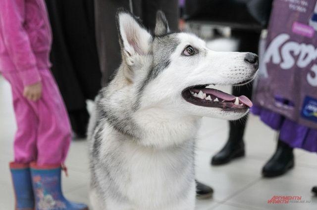 На Пермской ярмарке проходит выставка собак всех пород.