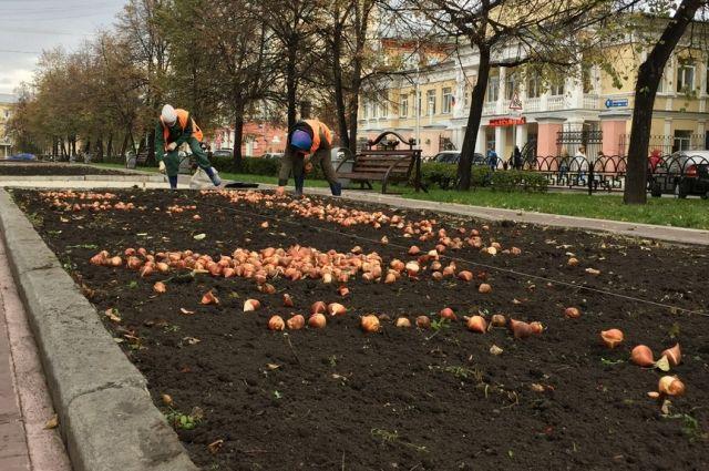 Кюбилею Кемерова вгороде высадят больше млн. цветов