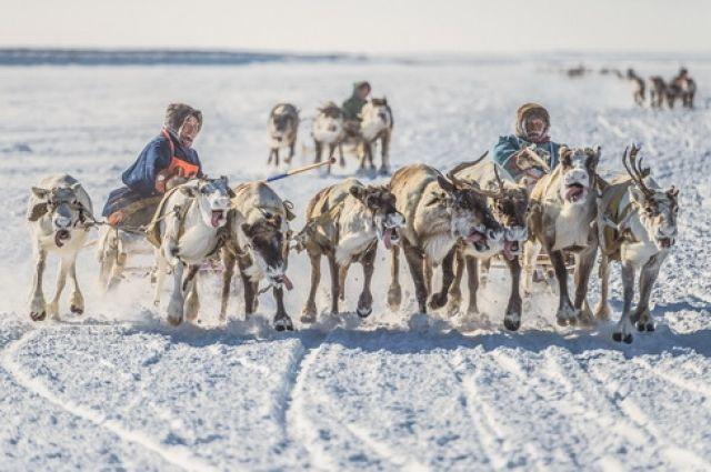 Межмузейный проект впервые позволяет рассмотреть тысячелетний русский путь на Север.